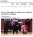 La corrida rayée du patr...rel immatériel français